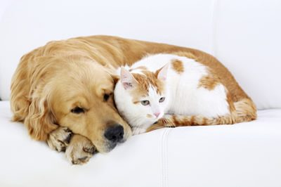 cat-and-dogs1